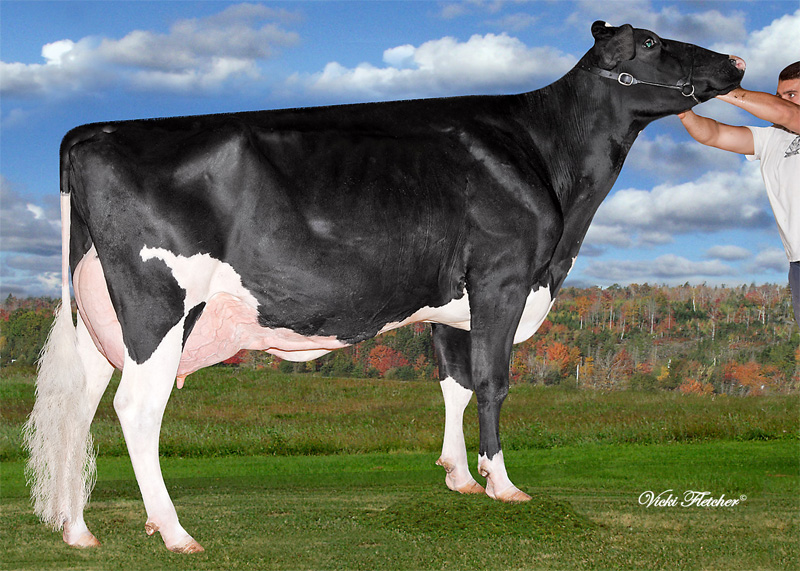 GM: Amities Goldwyn Lover
