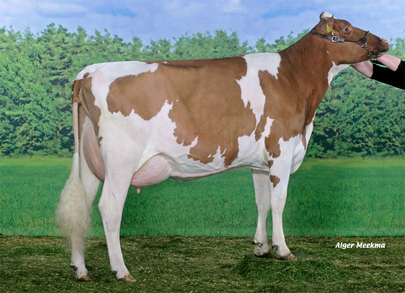 MM: Maria Red VG 89